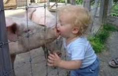 porcul carne