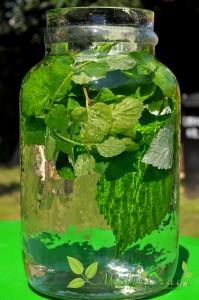 apa enzimatică pe bază de frunze verzi